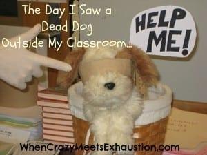 One Teacher's Sixth Sense: I See Dead Dogs
