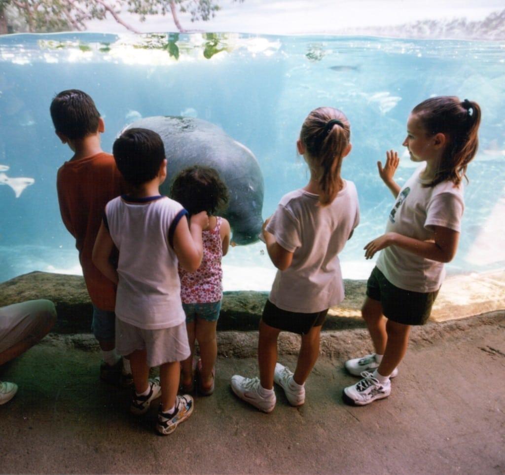 zoo_mantees