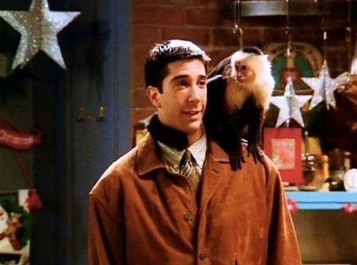 Ross pet monkey